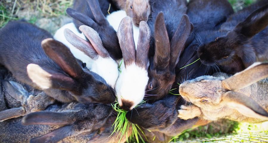Кролі в Карпатах