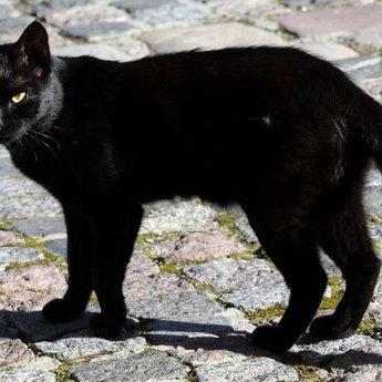 Чорна кішка, Вежа Ведмежа