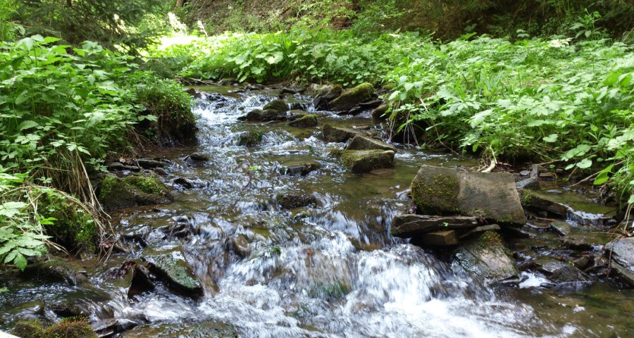 Stream in the forest, Volosyanka-Slavske Carpathians