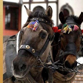 Коні у Вежі Ведмежій, готель в Карпатах