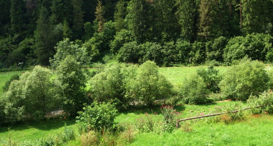 Green banks of the river Carpathian Slavka