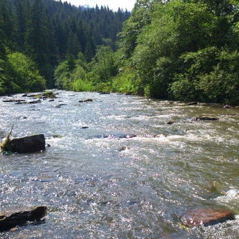 Mountain River in the Carpathians summer