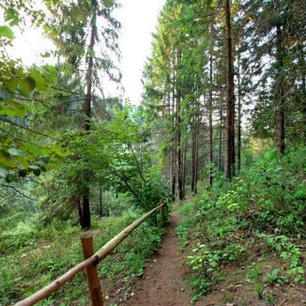 Bear footpath, summer, Carpathians