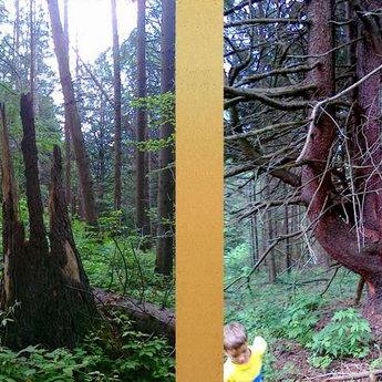 Медвежья тропа