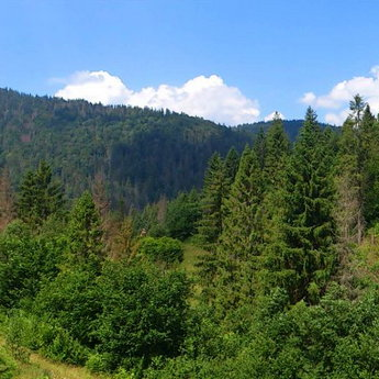 Bear footpath, trident in the Carpathians