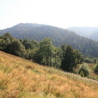 Bear trail, Carpathians Summer