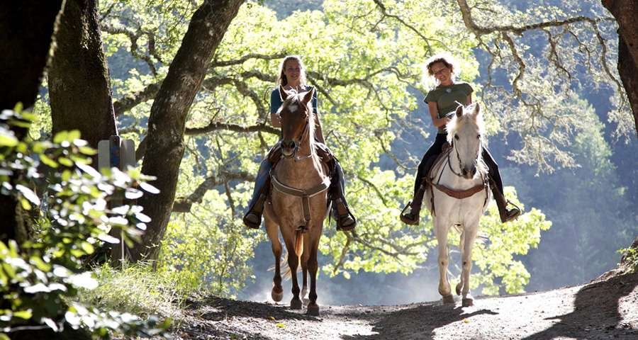 Riding in the Carpathian Mountains, horses