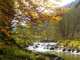 Відпочинок біля річки
