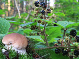 Picking mushrooms and berries