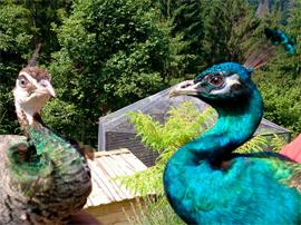Звірі і птахи